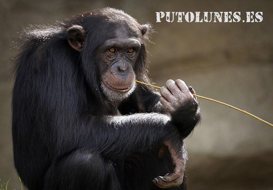 putolunes.es puto lunes mono filósofo de lunes