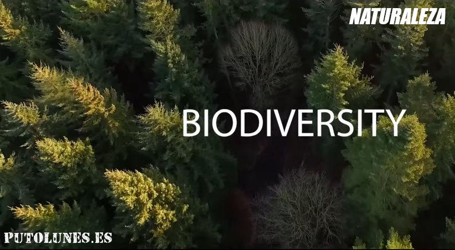 Día mundial del medio ambiente: biodiversidad.