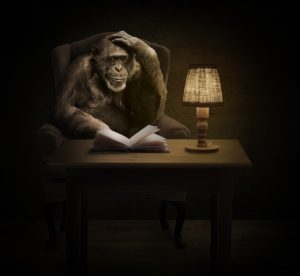 Chimpancé leyendo un libro.