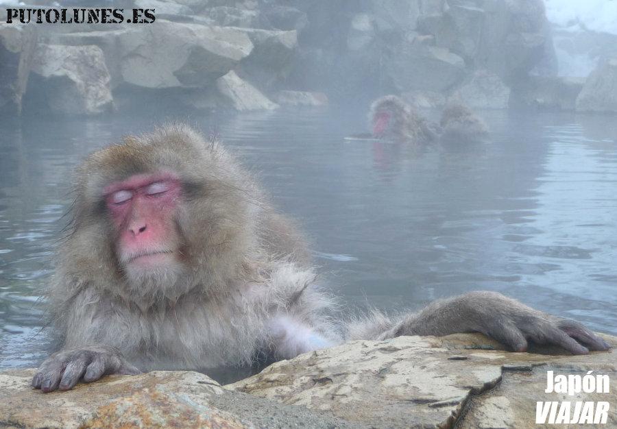 Viaje virtual: monos calientes.