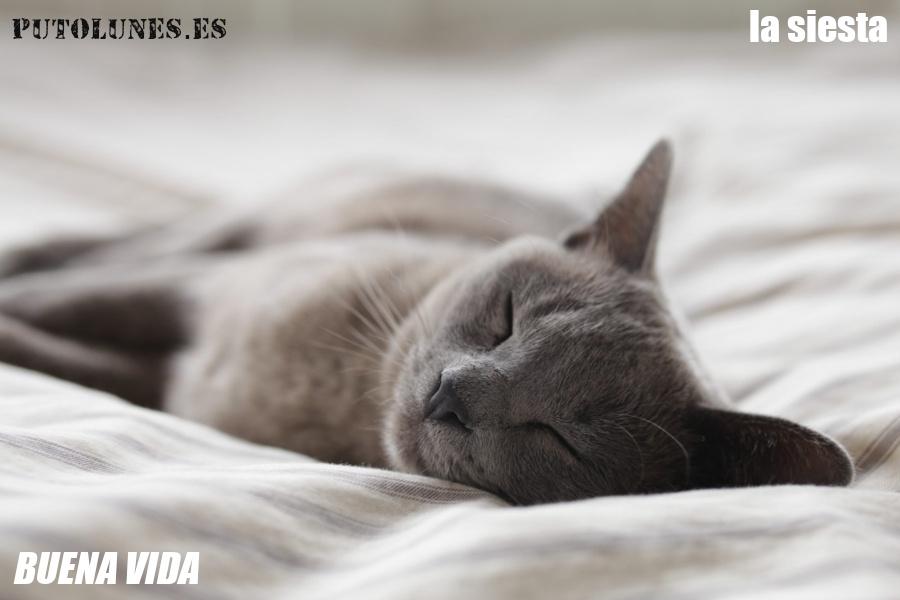 Buena vida: la siesta.