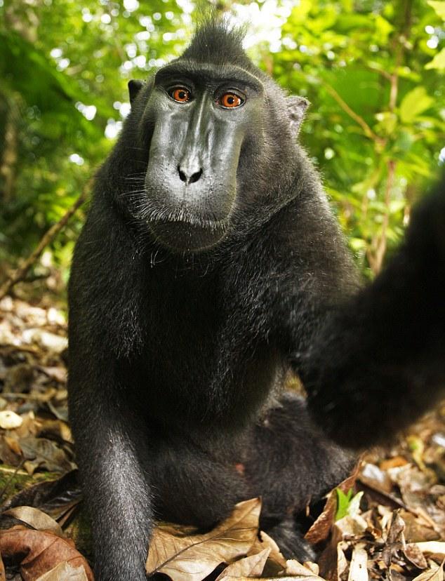 Retrato de macaco negro en la selva.